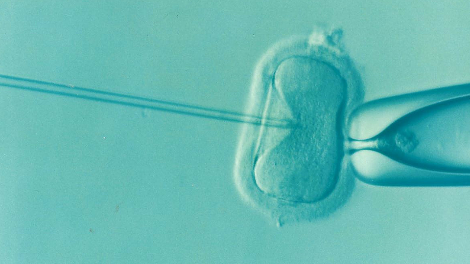 Fertility Preservation Options for Women Diagnosed With Cancer